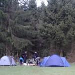 Forest Glade - Bronze Practice